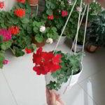 植木鉢をひもで吊す時のひものかけ方動画