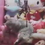 本物の猫がもらえるクレーンゲーム